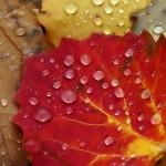 Herbst | Foto von Kai Rossmann