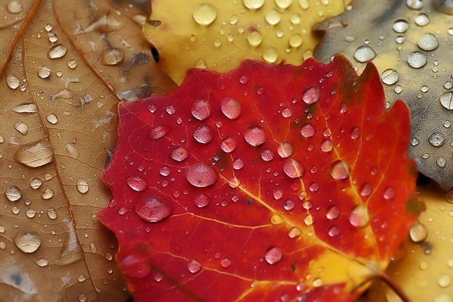 Im Herbst  Spektivblick
