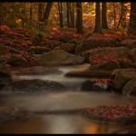 Herbst | Bild von Ingo Doering