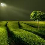 Lichtblick | Bild von Veronika Pinke