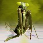 Weltmacht Insekten