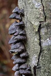 399px-Fungi_273691251